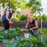 Gartenarbeit im Essbarer-Waldgarten in Heide-Nord